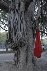 Knotted Womb - Cotton bag and banyan tree, Aurangabad Residency, India